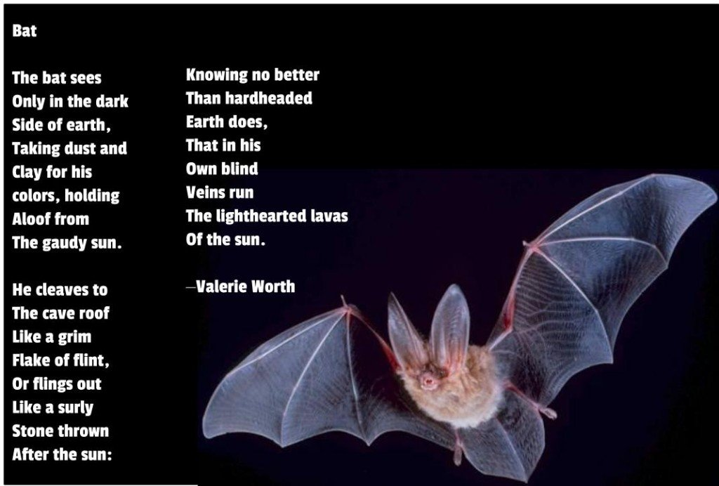 From Valerie Worth, Animal Poems. (Made with Google Draw.)