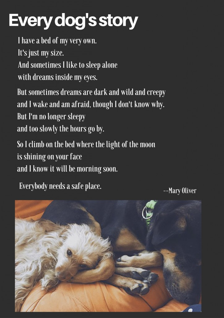 From Mary Oliver, Dog Songs. (Made with Canva.)